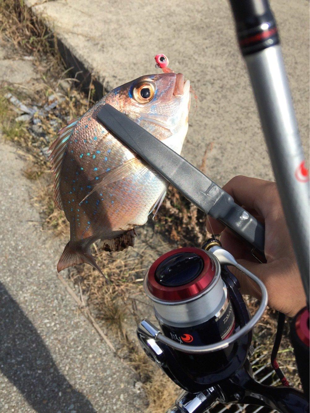 Riccardo さんの投稿画像,写っている魚は
