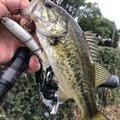 ケンピさんの滋賀県での釣果写真