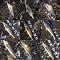マーシーさんの千葉県千葉市での釣果写真