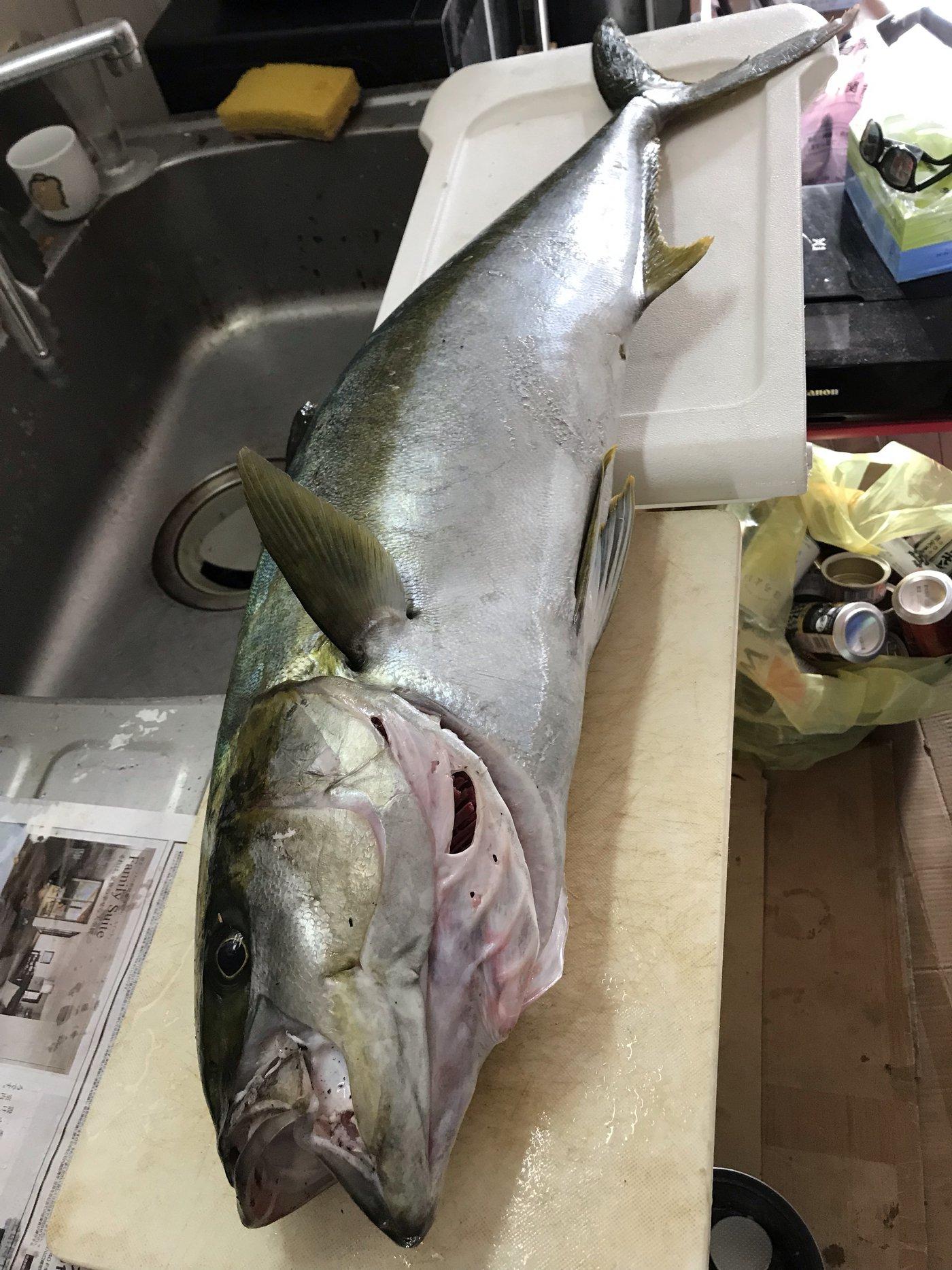 シヴァさんの投稿画像,写っている魚はヒラマサ