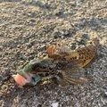 ひでりんこさんのアナハゼの釣果写真