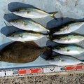 takaさんのヒラメの釣果写真