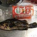 たけやん@フォロバしまっせーさんの愛知県でのタケノコメバルの釣果写真