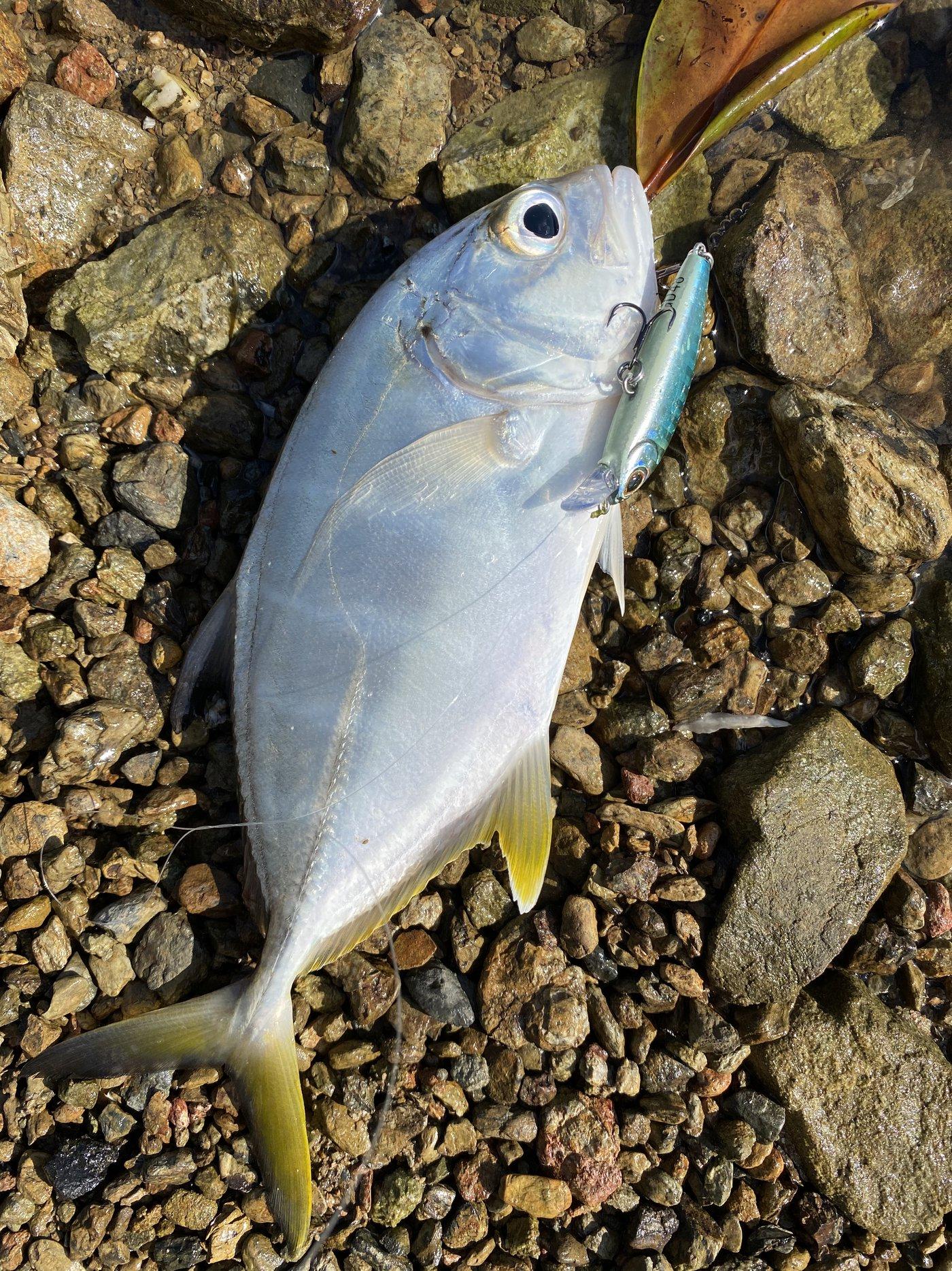 かつてのバスプロさんの投稿画像,写っている魚はギンガメアジ