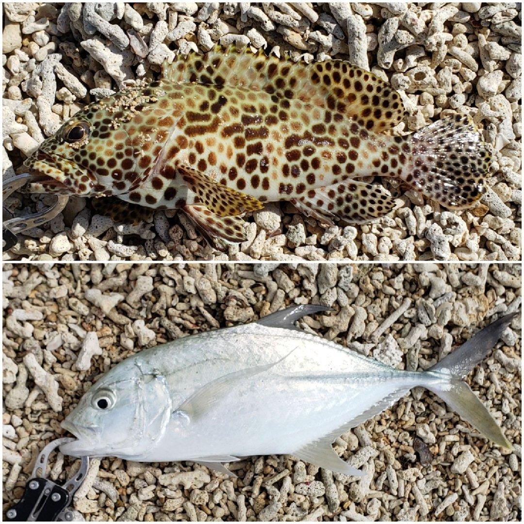 ミズノ・アワさんの投稿画像,写っている魚はアジ,