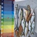 影竿さんの佐賀県唐津市での釣果写真