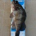 どさんぴんさんの岡山県での釣果写真