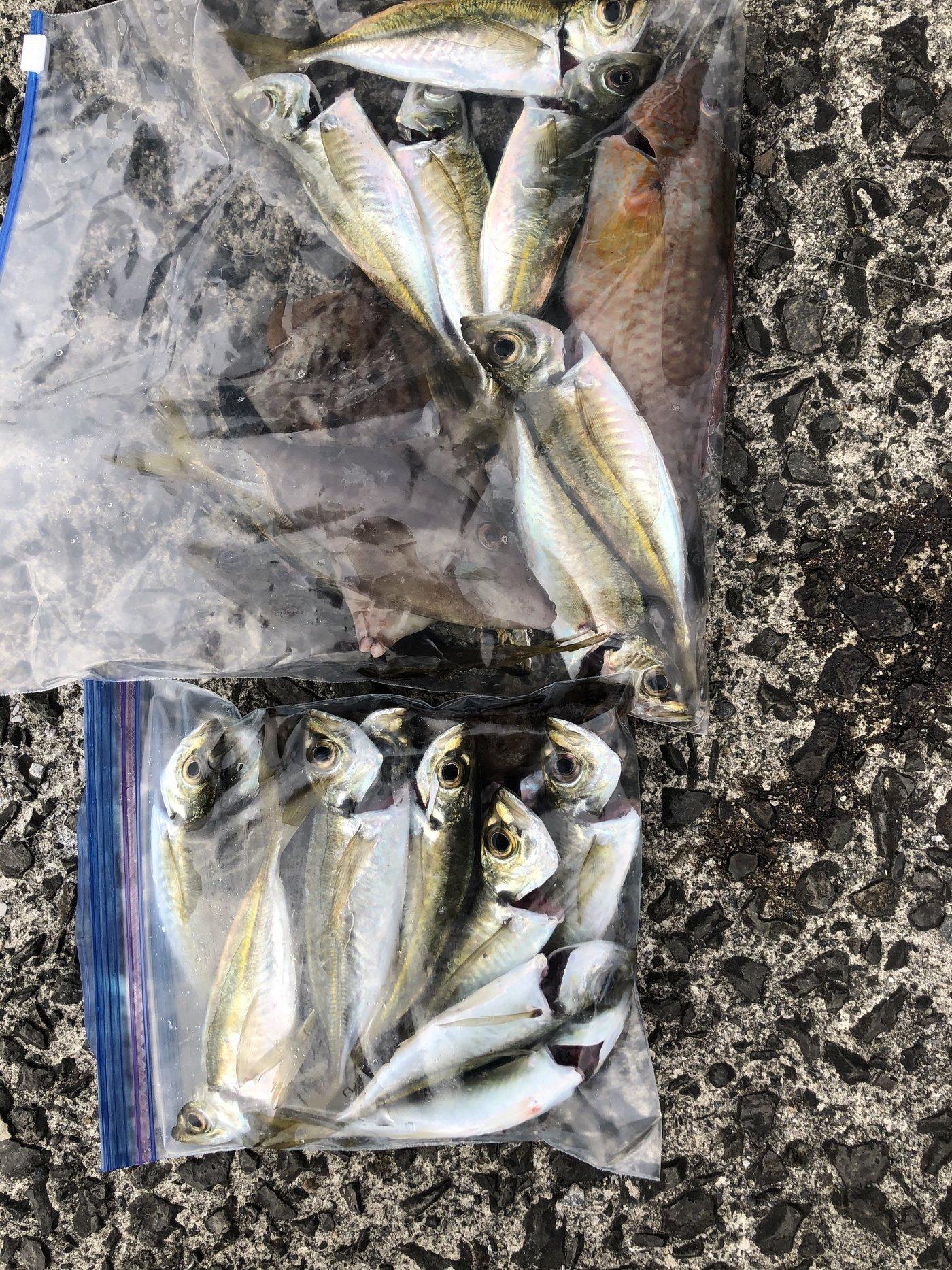 ぼんくぅさんの投稿画像,写っている魚はアジ,キュウセン,カワハギ