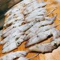 あかべこさんの千葉県千葉市でのジンドウイカの釣果写真