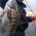 satoyanさんの大阪府泉南市での釣果写真
