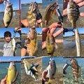 マサマサ🐡さんの沖縄県での釣果写真