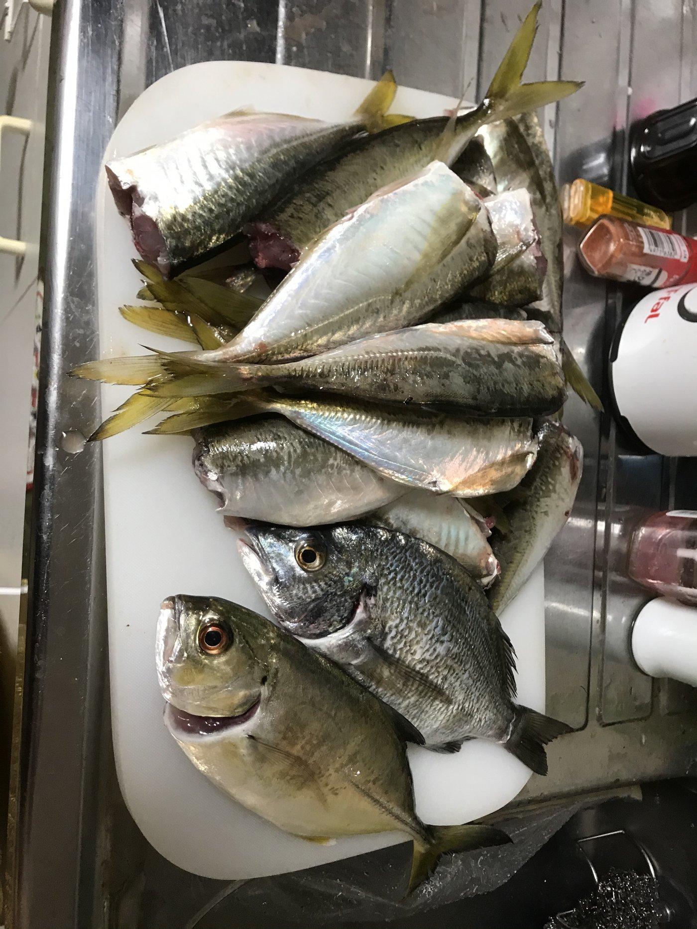 ryoさんの投稿画像,写っている魚はギンガメアジ,アジ,クロダイ