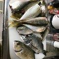 ryoさんのクロダイの釣果写真
