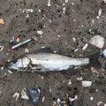 さよ*ˊᵕˋ)੭さんの茨城県神栖市での釣果写真