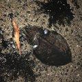 soldier_fishさんの香川県観音寺市での釣果写真