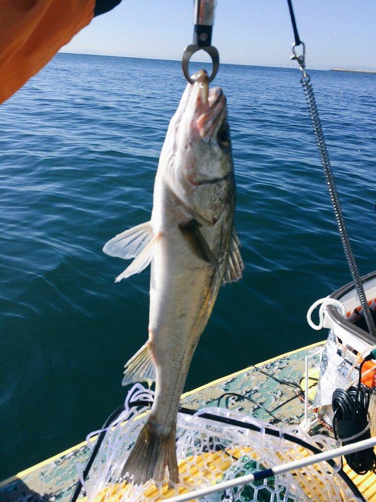 りこぴんさんの投稿画像,写っている魚はスズキ