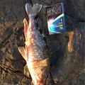 フルフルさんの鹿児島県出水郡でのカサゴの釣果写真