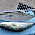デントマンさんの和歌山県での釣果写真
