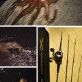 snufkin49さんの兵庫県明石市でのマダコの釣果写真