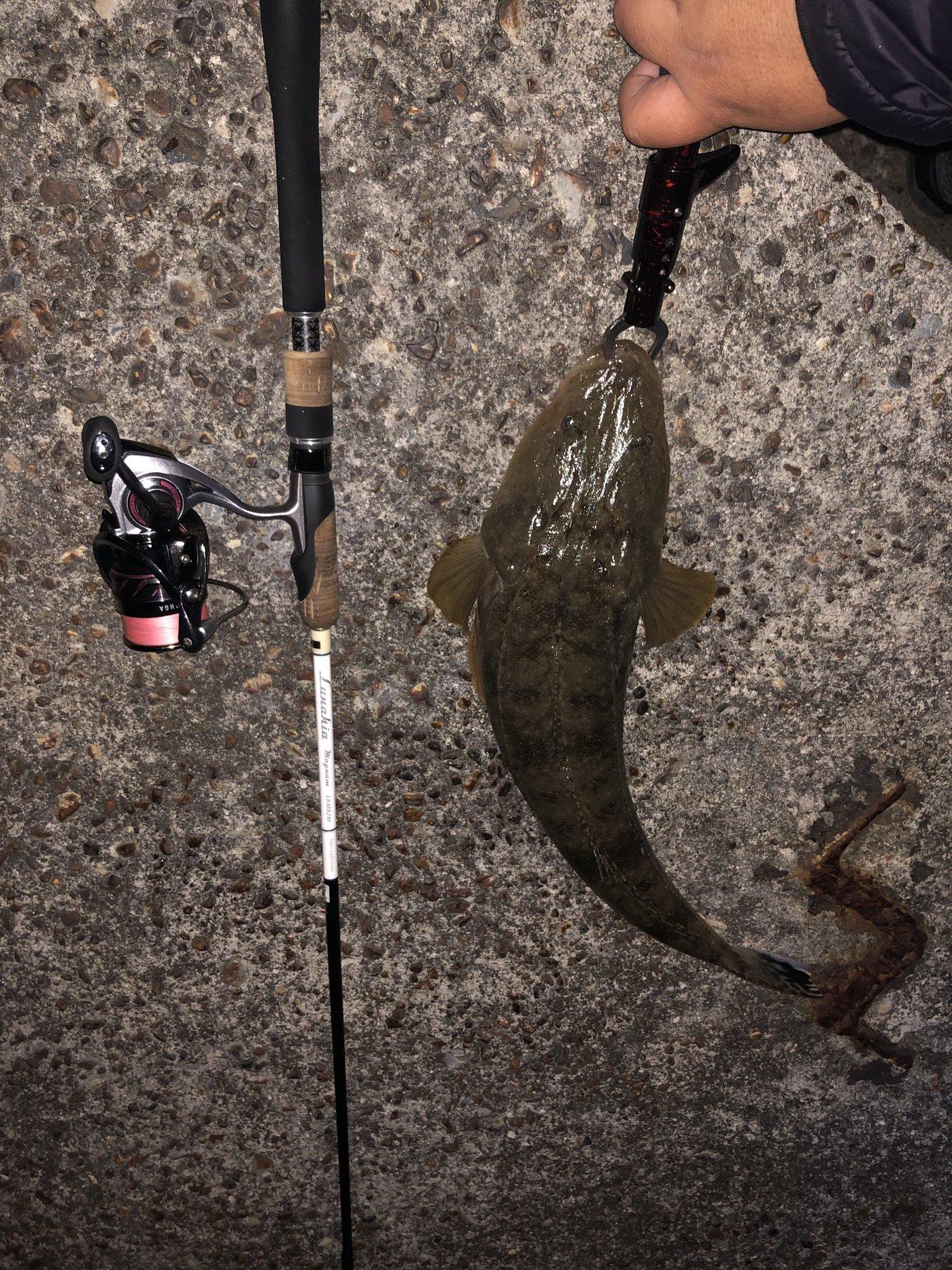 神楽さんの投稿画像,写っている魚はコチ,キジハタ