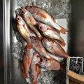 マーやんさんの富山県でのアカムツの釣果写真