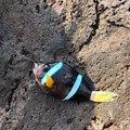 ユンボマンさんの鹿児島県での釣果写真