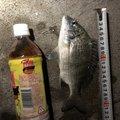 ちんくさらーず/しょーさんの沖縄県うるま市での釣果写真