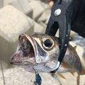 Usukeさんの長崎県での釣果写真