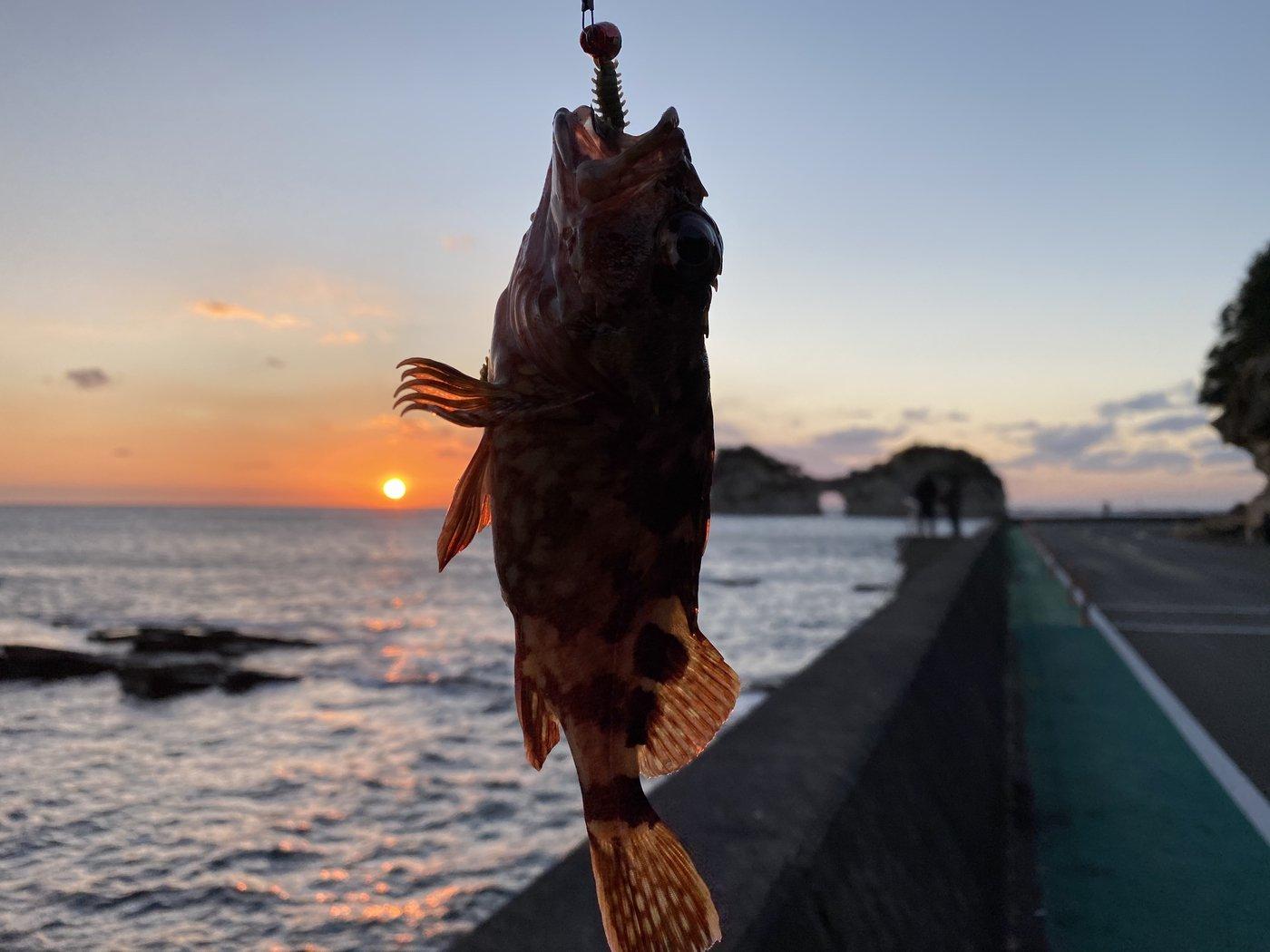 masahir0さんの投稿画像,写っている魚はカサゴ
