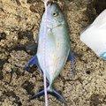 skaさんの沖縄県うるま市での釣果写真