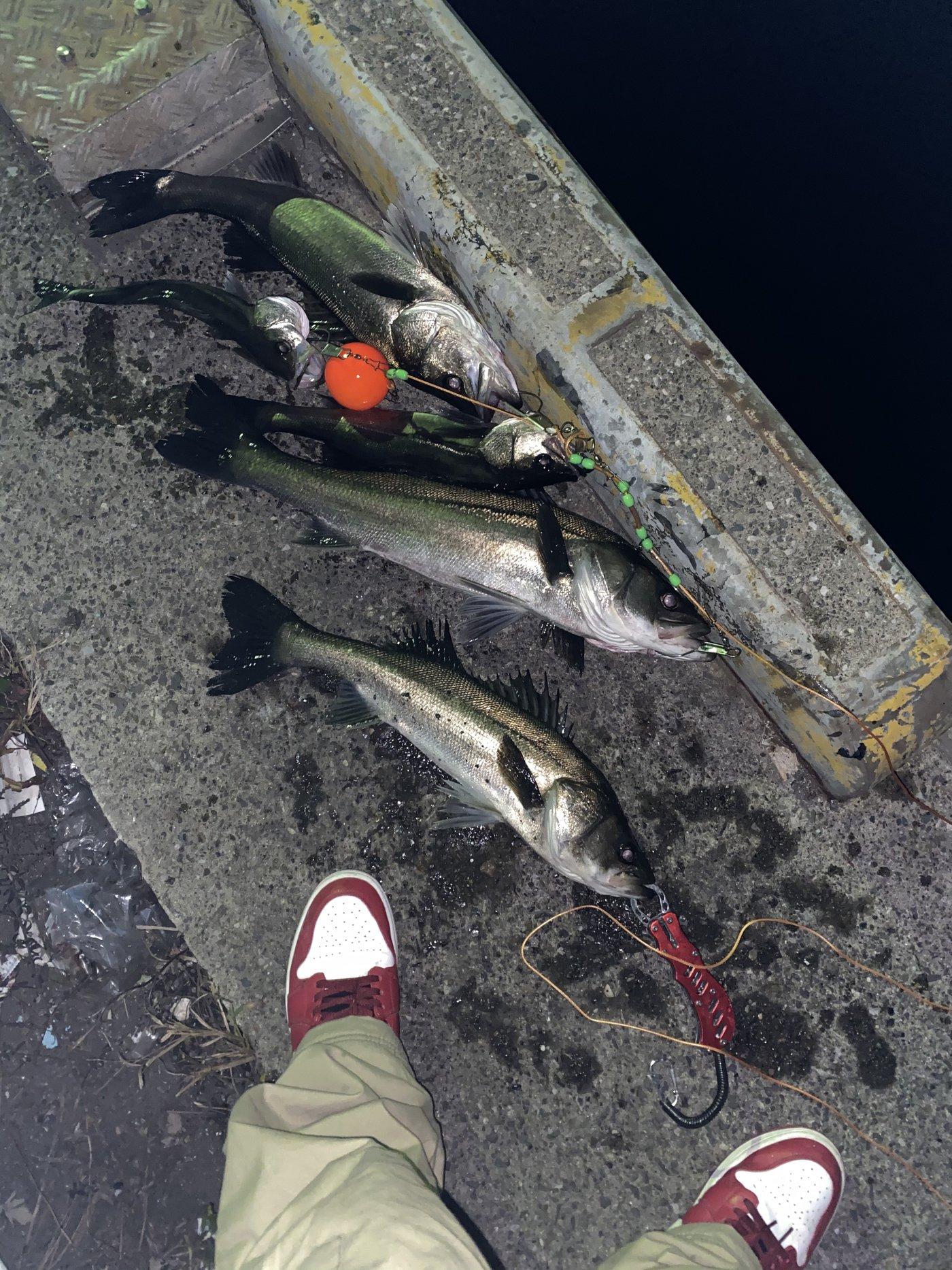 いとちんさんの投稿画像,写っている魚はスズキ