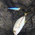 souhina!!さんの鹿児島県での釣果写真