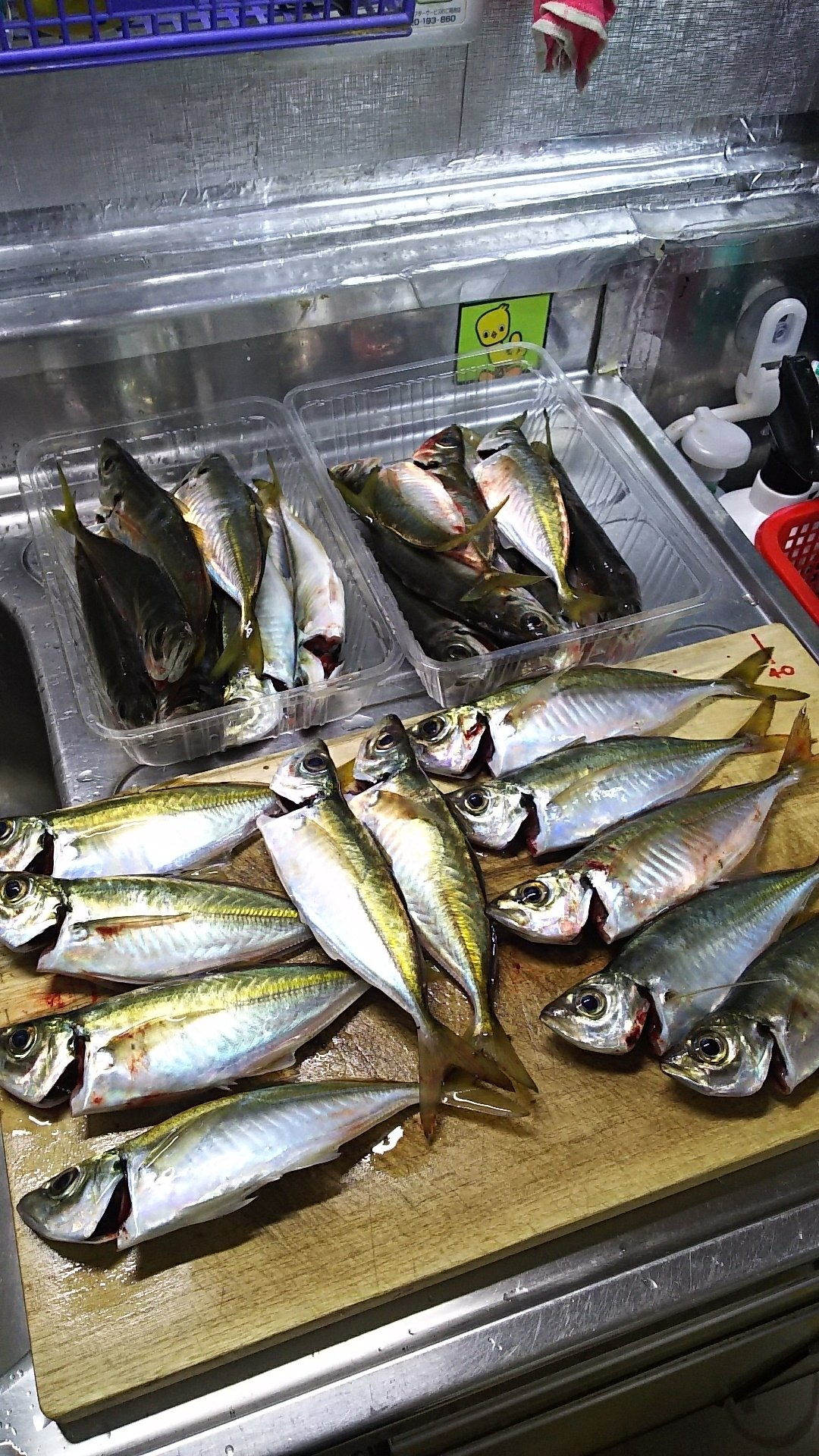 おんびんさんの投稿画像,写っている魚はアジ