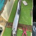 かつてのバスプロさんの神奈川県でのタチウオの釣果写真