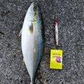Mさんの熊本県での釣果写真