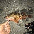 かずよしさんの熊本県での釣果写真