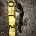 カトカトさんの三重県四日市市での釣果写真