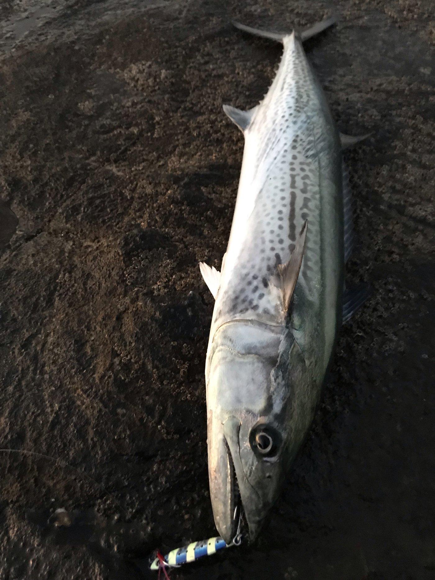 ディノさんの投稿画像,写っている魚は
