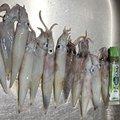 なまたまごさんの宮城県気仙沼市での釣果写真