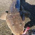 涅槃_BLEEDさんの茨城県神栖市での釣果写真