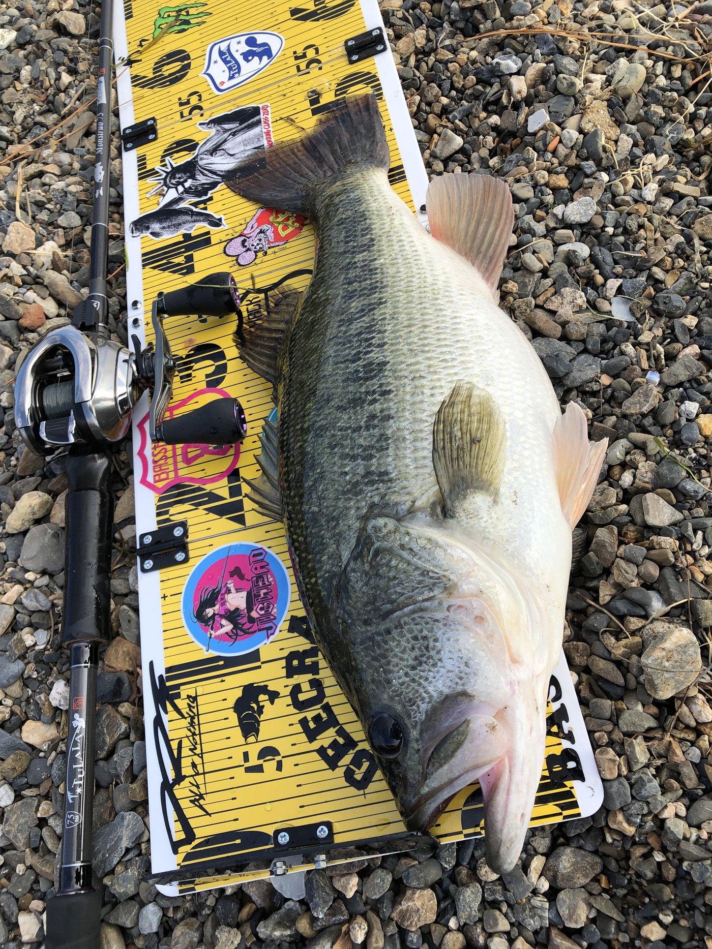 イソッチさんの投稿画像,写っている魚はブラックバス