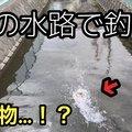 もりやさんの神奈川県小田原市での釣果写真