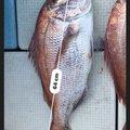 ken2さんの熊本県での釣果写真