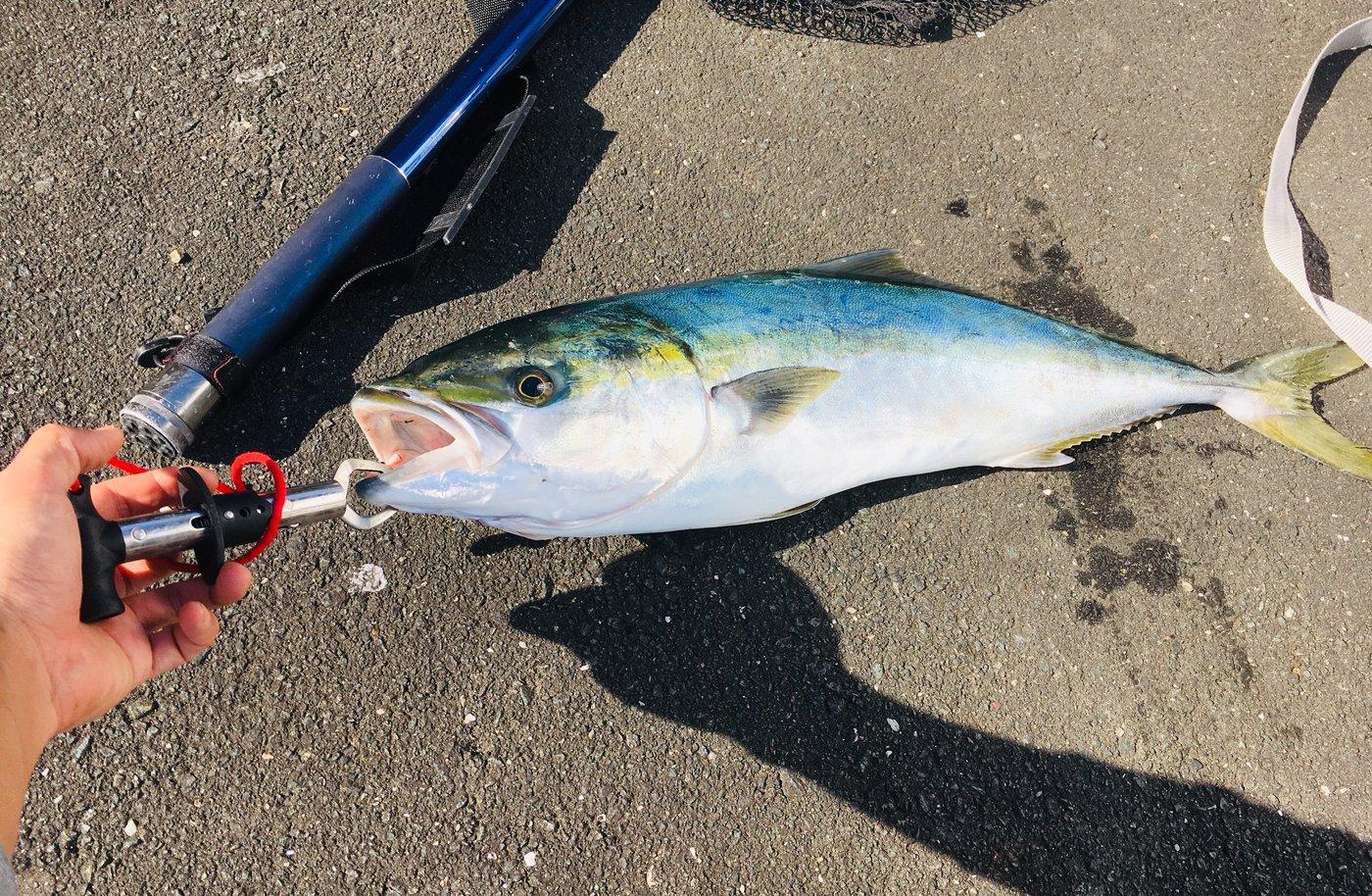 ヤスアキさんの投稿画像,写っている魚はブリ,エソ