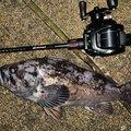 だらしない男a.k.aパパさんの青森県での釣果写真