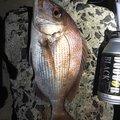 西岡春雄さんの山口県大島郡での釣果写真