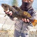 shoさんの青森県での釣果写真