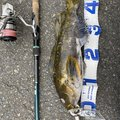 ちょさんの青森県での釣果写真