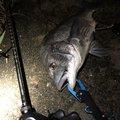 アブさんの東京都での釣果写真