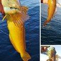 snufkin49さんのアナハゼの釣果写真